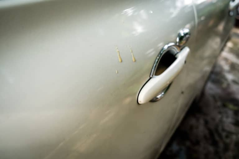 How to Clean Tree Sap Off Your Car