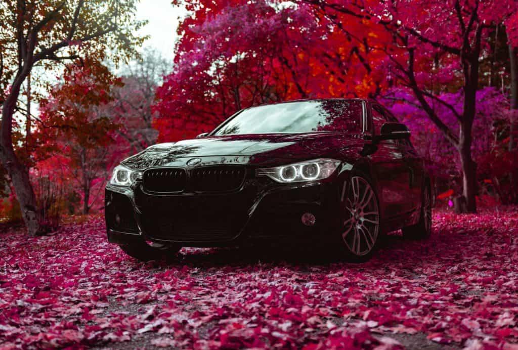 black car in a rose forest